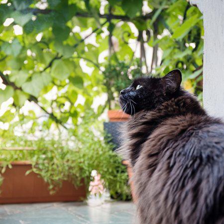 Karo in the garden, czyli mój jest ten kawałek balkonu
