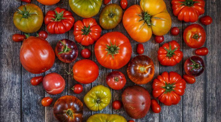 Pomidorowe oczko, czyli 21 odmian pomidorów które uprawiałam tym roku
